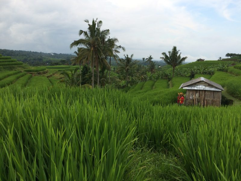 Unesco Rice Fields - Bali Visitors Guide
