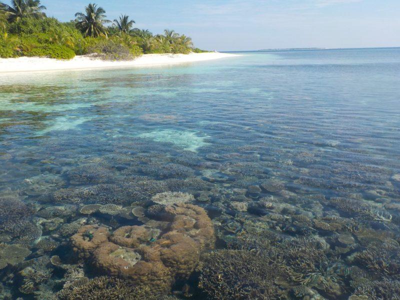 Fact List and Travel Guide – Maldives and Maafushi